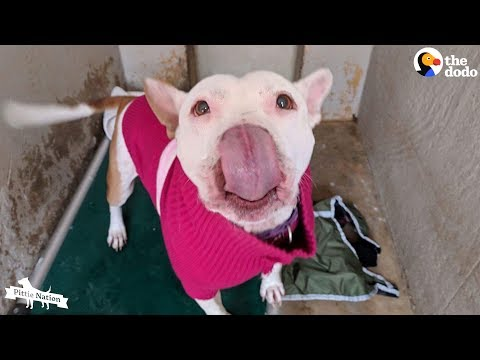Pittie Never Stopped Smiling All 4 Years She Was In The Shelter  | The Dodo Pittie Nation