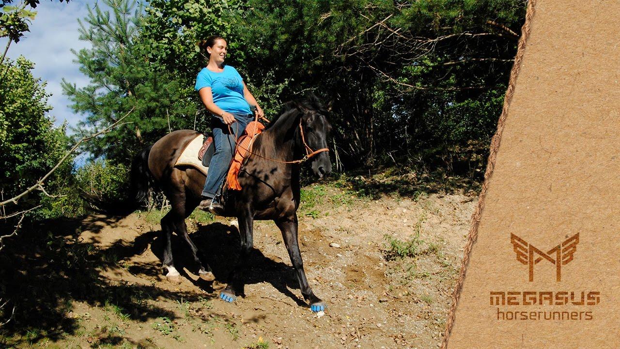 Horse Runners