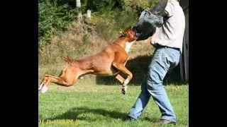 Напала собака. Что делать(Нападение собаки на человека случай не редкий. Причин, по которым эти животные проявляют агрессию, множество., 2015-06-06T19:45:21.000Z)