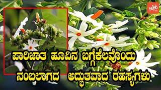 ಪಾರಿಜಾತ Night Flowering Jasmine Unbelievable Secrets | Parijat Tree And Flower | YOYO Kannada News