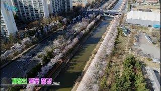2019 서부간선수로 벚꽃 풍경 하이라이트썸네일