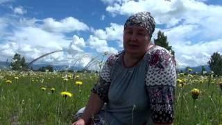 видео Богородская трава: лечебные свойства, фото