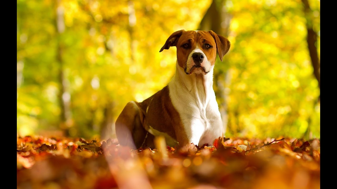 Beautiful Autumn Wallpapers Autumn Photos Compilation With Music