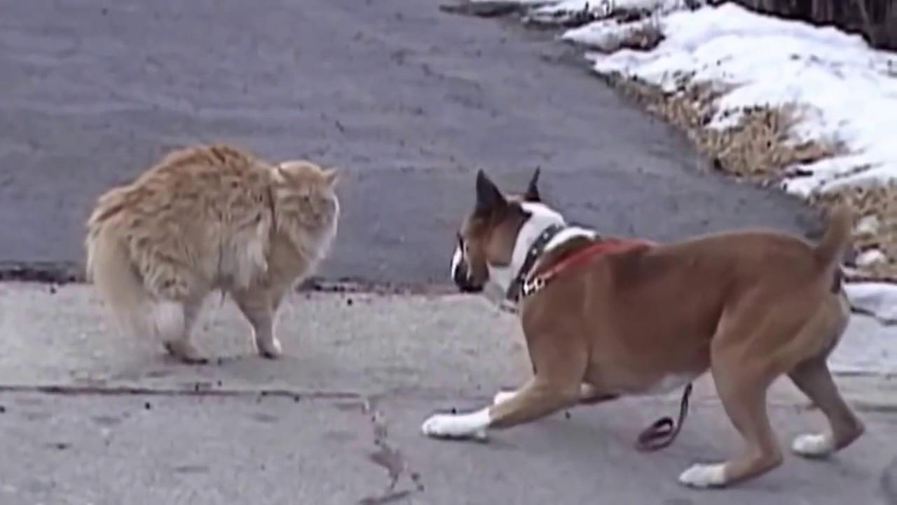 Коты победили видео