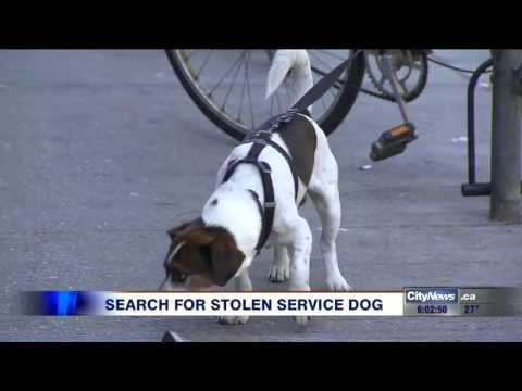 Service dog stolen near Bloor and Ossington