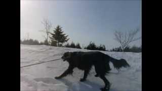 ココちゃんのお散歩は歩くというよりピョンピョン跳ねてます。 氷も美味...
