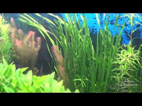 Красивый большой аквариум. Травник. Аквариумные растения
