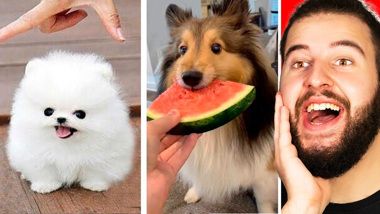 Animales Graciosos Que Te Harán Reír   Edición Perros