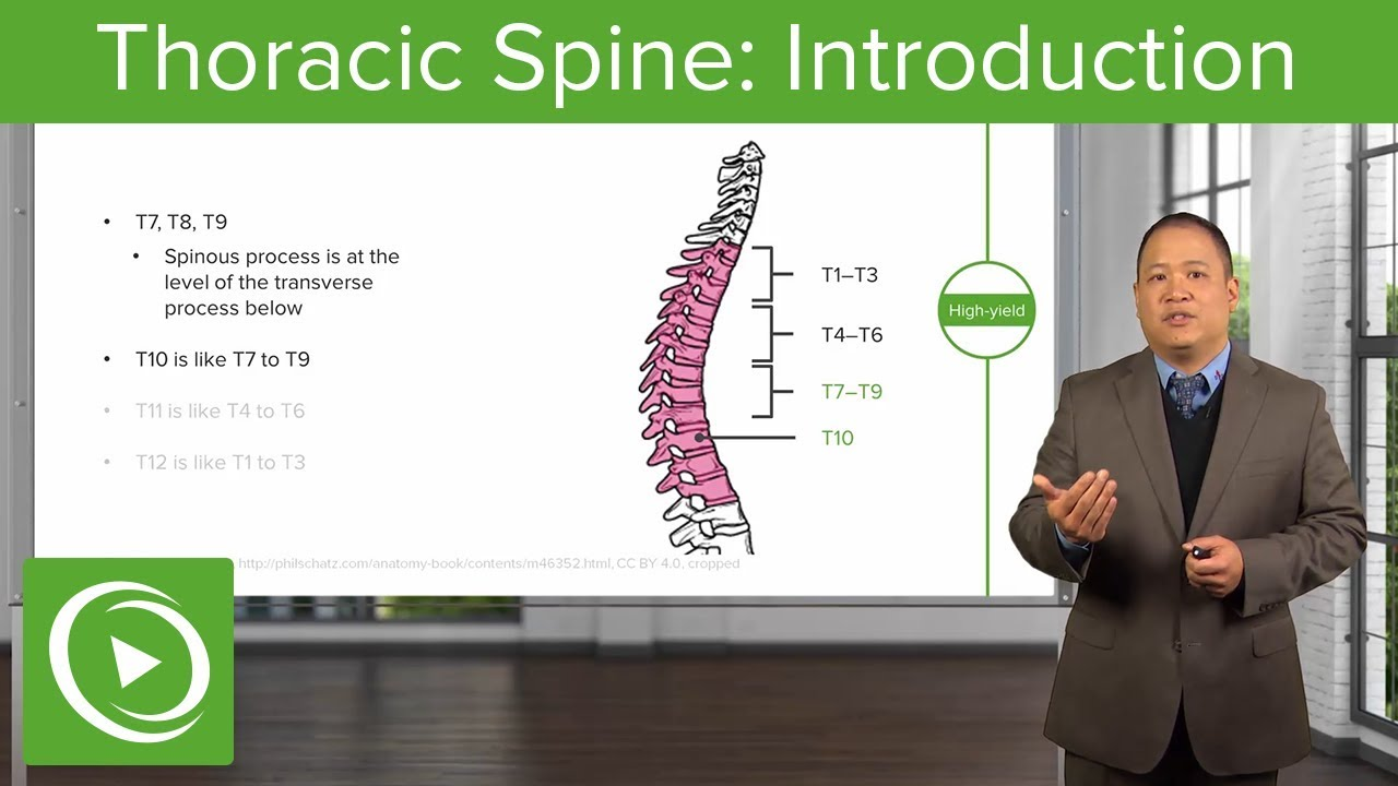 Thoracic Spine: Introduction – Osteopathic Manipulative Medicine | Lecturio