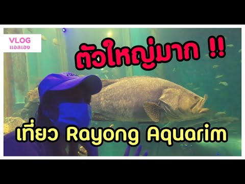 ดูปลาทะเลที่สถานแสดงพันธุ์สัตว์น้ำระยอง ฮิ (Rayong Aquarium)