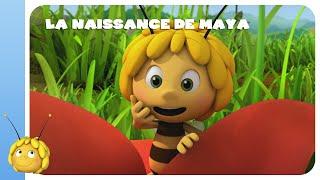 MAYA L'ABEILLE - LA NAISSANCE DE MAYA (1/2)