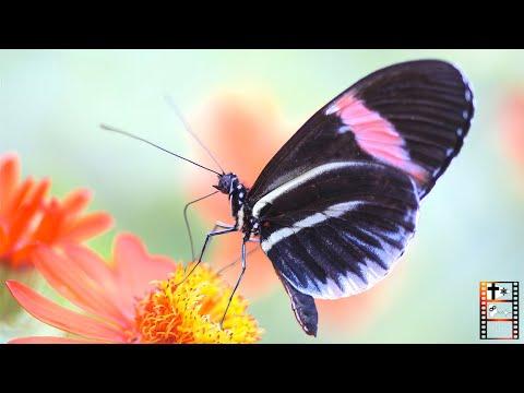 Das Wunder der Schmetterlinge