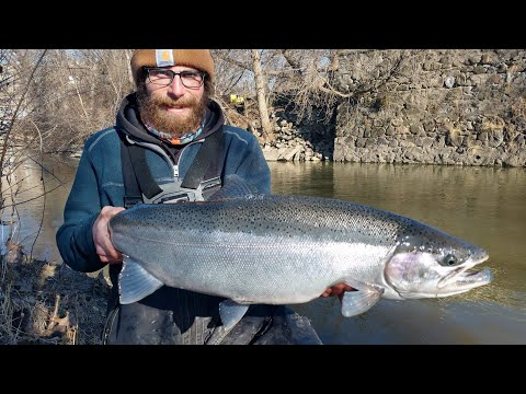 River Fishing - Big Brown Trout & Steelhead - January 2020