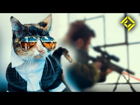 Secret Service Cat