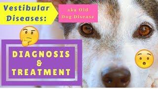 Vestibular Diseases (Old Dog Disease): Diagnosis and Treatment