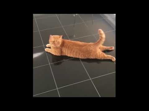Cute Fluffy Cat Compilation 2 march 2018