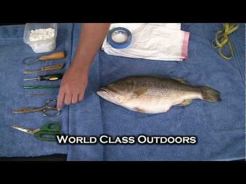 How To Mount A Fish - Bass Taxidermy - From Home