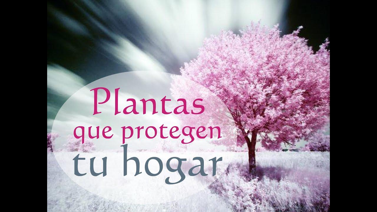 Plantas que protegen tu hogar youtube - Planta alegria de la casa ...
