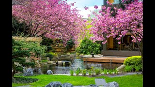 The magic of sakura - Hotel Okura Amsterdam