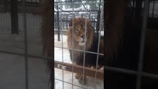 Приют для животных в Московской области