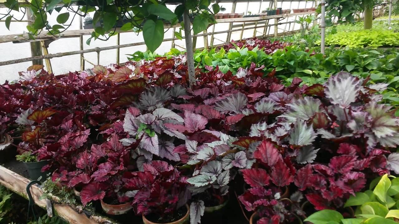 Plantas para decorar su casa dentro y fuera youtube for Plantas para decorar