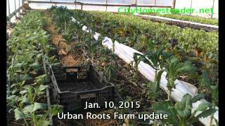 Urban roots Jan 2015 update