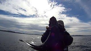 Морская рыбалка в Териберке. Треска. Кольский п-ов. (ч.1)