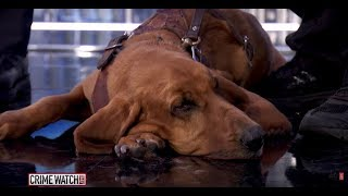 Breeding dogs to find missing children