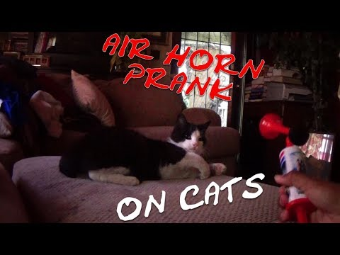 XM PRANKS - AIR HORN PRANK ON CATS - EPISODE 7