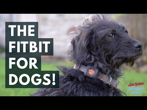 Pitpat, the Fitbit for dogs reviewed