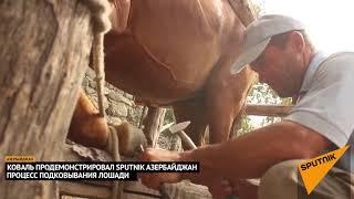 """""""Педикюр"""" для скакуна: как азербайджанский кузнец подковывает лошадь"""