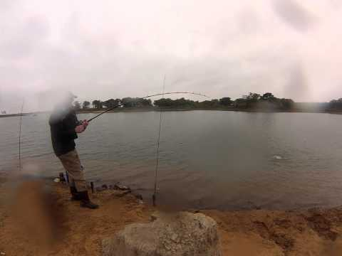 Big Blue Catfish!  Lake Lewisville Bank Fishing