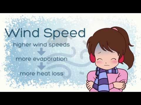 What is the Wind Chill Index?