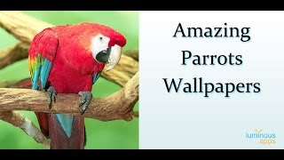 Amazing Parrots Live Wallpaper Android App