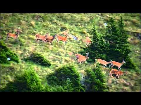 Das Leben der Hirsche und Rehe in den Alpen 2013