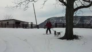 Skijoring With My Pups In Virginia