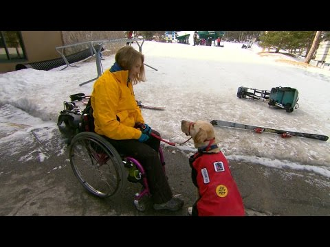 Laws aim to crack down on service dog impostors