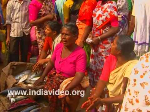 Busy bargaining - scene from Pulluvila fish market