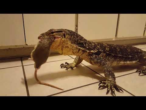 Vise grip (live feeding)