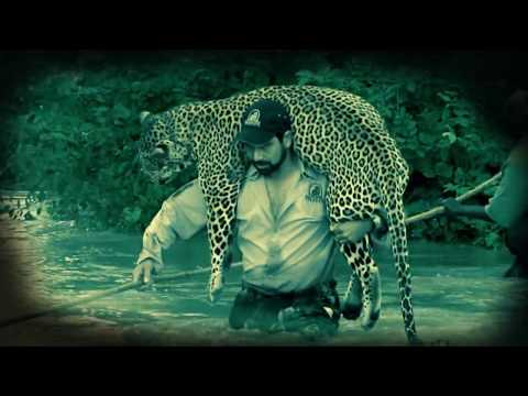 Patience and Pressure-Hunting the African Leopard-Diizche Safari Adventures Clip