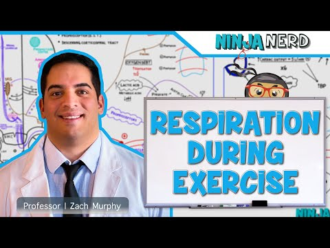 Respiratory | Respiration During Exercise