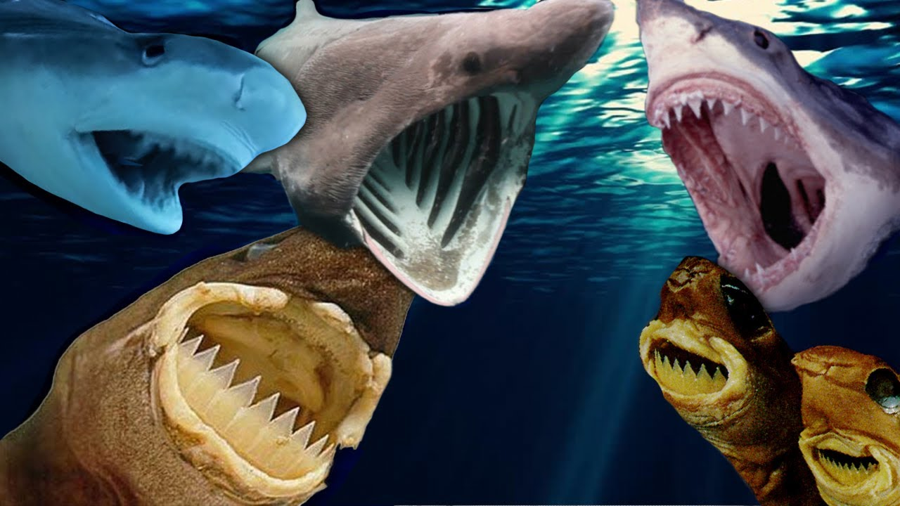 Most Dangerous Sharks: 10 Facts About Man-Eating Sharks ...