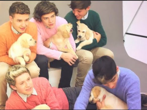 One Direction Plays With Puppies - 28.5KB