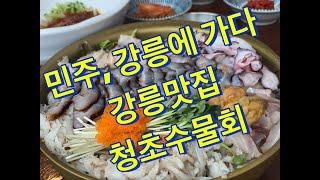 강릉 맛집 물회 청초수물회 먹방 성게 비빔밥