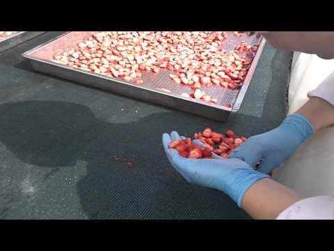 Organic Strawberries Silk Road Organic Foods Uzbekistan Part 2