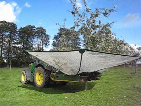 Récolte des pommes à cidre