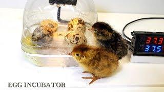 Water bottle Egg incubator  #1 (페트병으로 부화기 만들기)