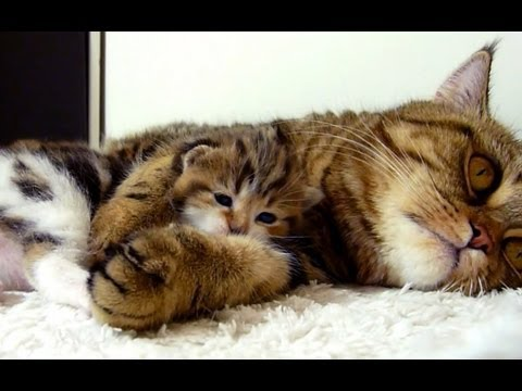 Mom Cat hugs her Cute Kitten Rocky | Mommy, Mommy, Hug Me !