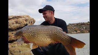 Karpfenangeln am Ebro I Fische bis 22 Kilo I Ronny´s Fishing Channel