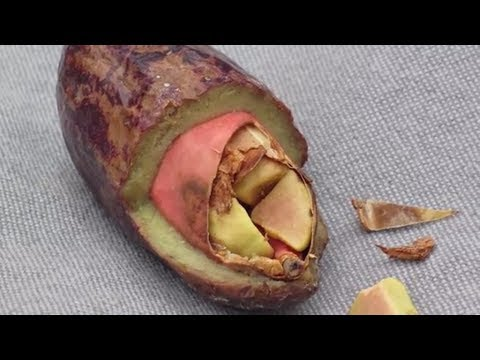 Unusual Fruits You May NOT Know About